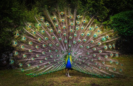 Barbados-must-see-wildlife-sanctuary